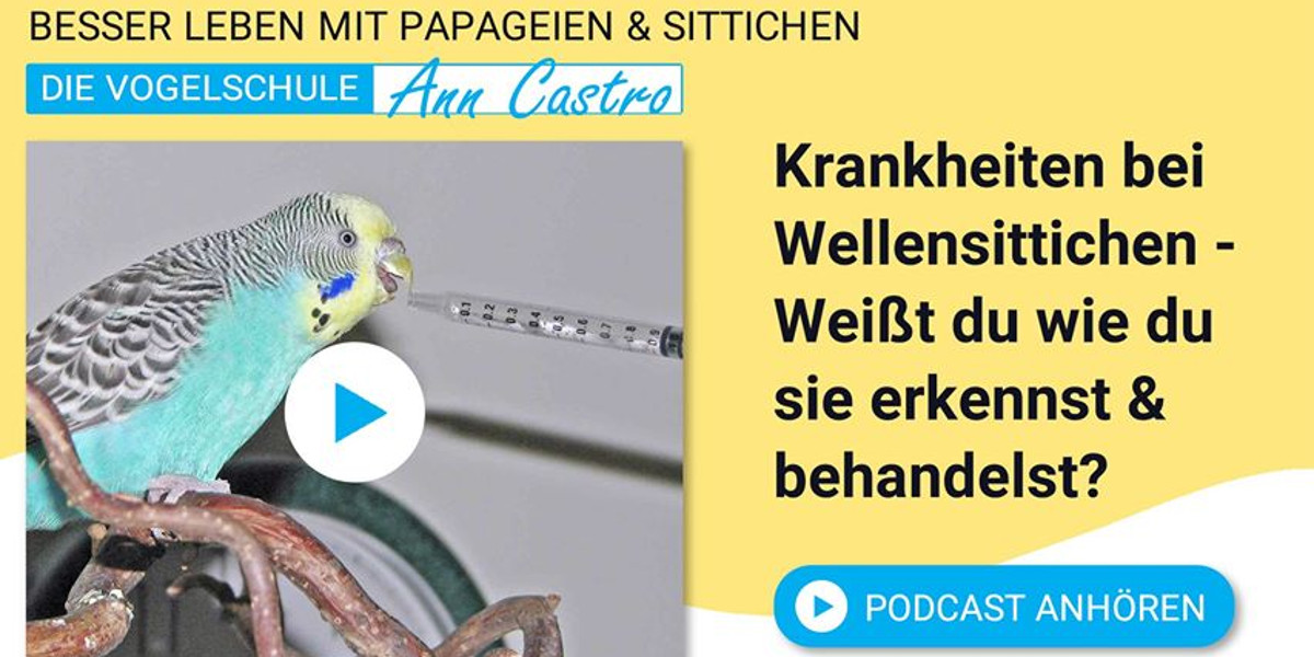 Wellensittiche Blog Podcast Teil 4 Krankheiten ann castro und wencke sabrina schacht Slider